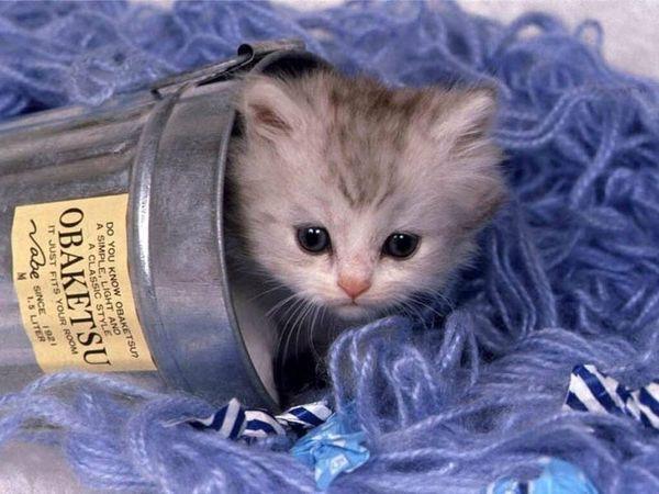 chaton dans un seau